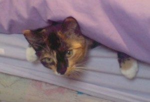 cat poking head out of bed sheets