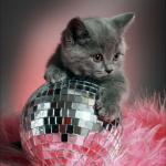 Kitten disco