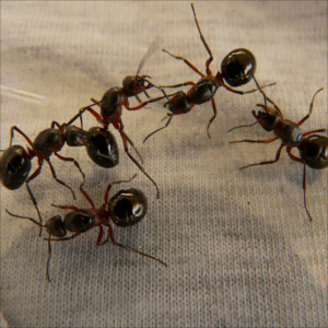 close up of 5 ants on fabric
