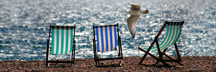 seaside and seagull